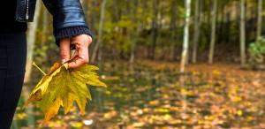 autumn-925727_640_Herbst_loslassen_pixabay